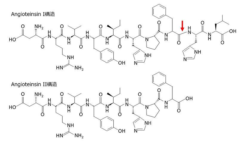 Angiotensin I構造