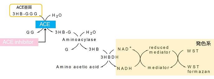 ACE阻害活性原理