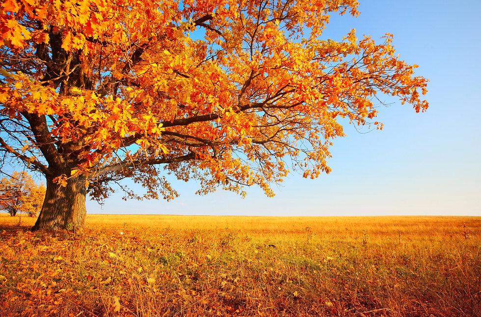 fall photo for website.jpg