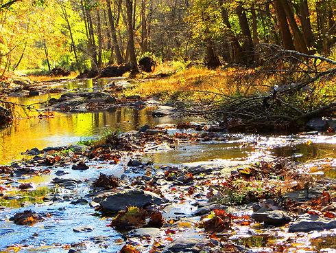babbling-creek-1526654_1920.jpg