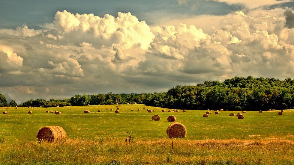 rural-4107054_1920.jpg