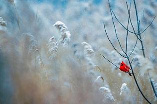 cardinal-1884283_1280.jpg