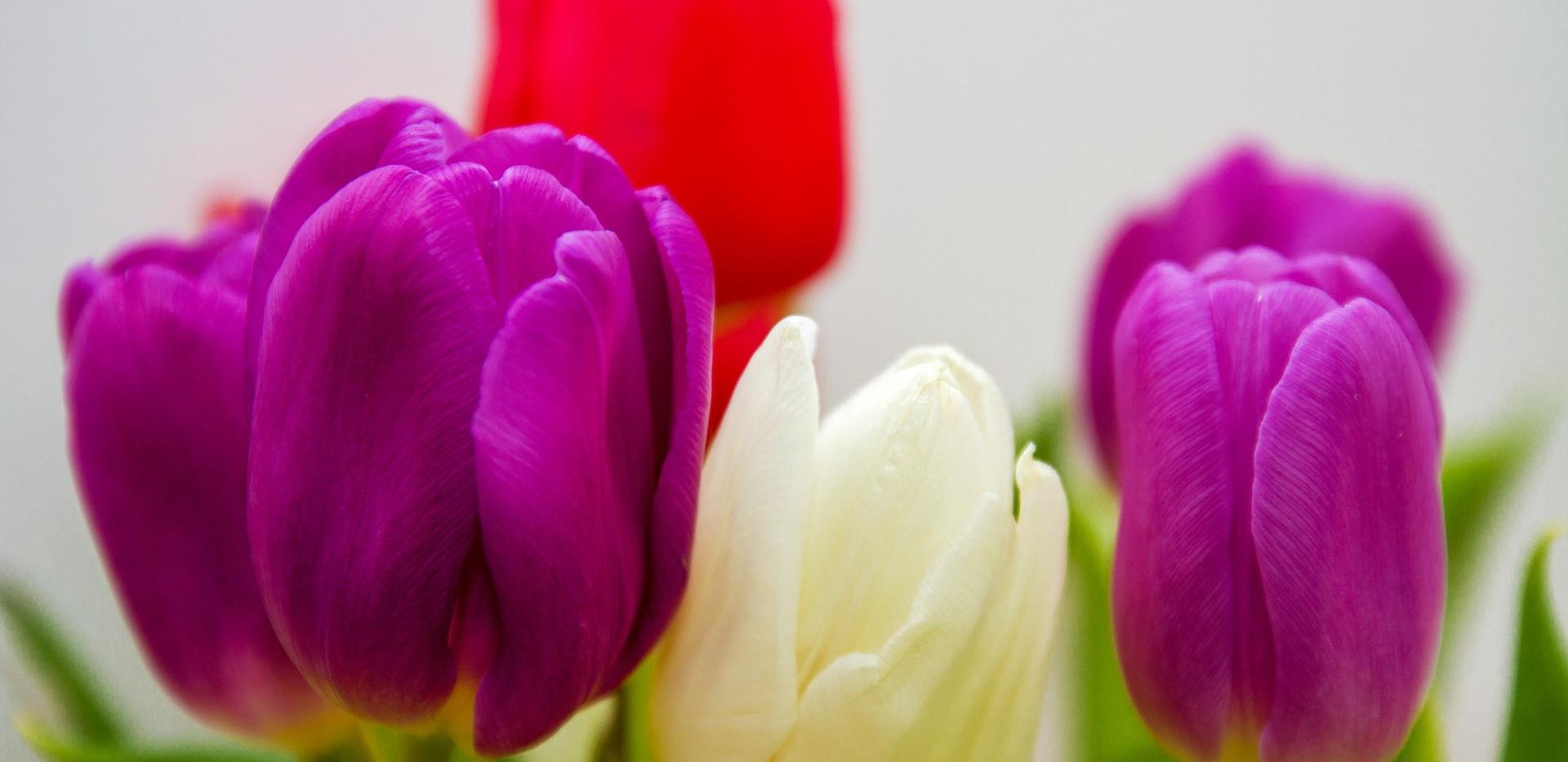flowers-3174987_1920.jpg