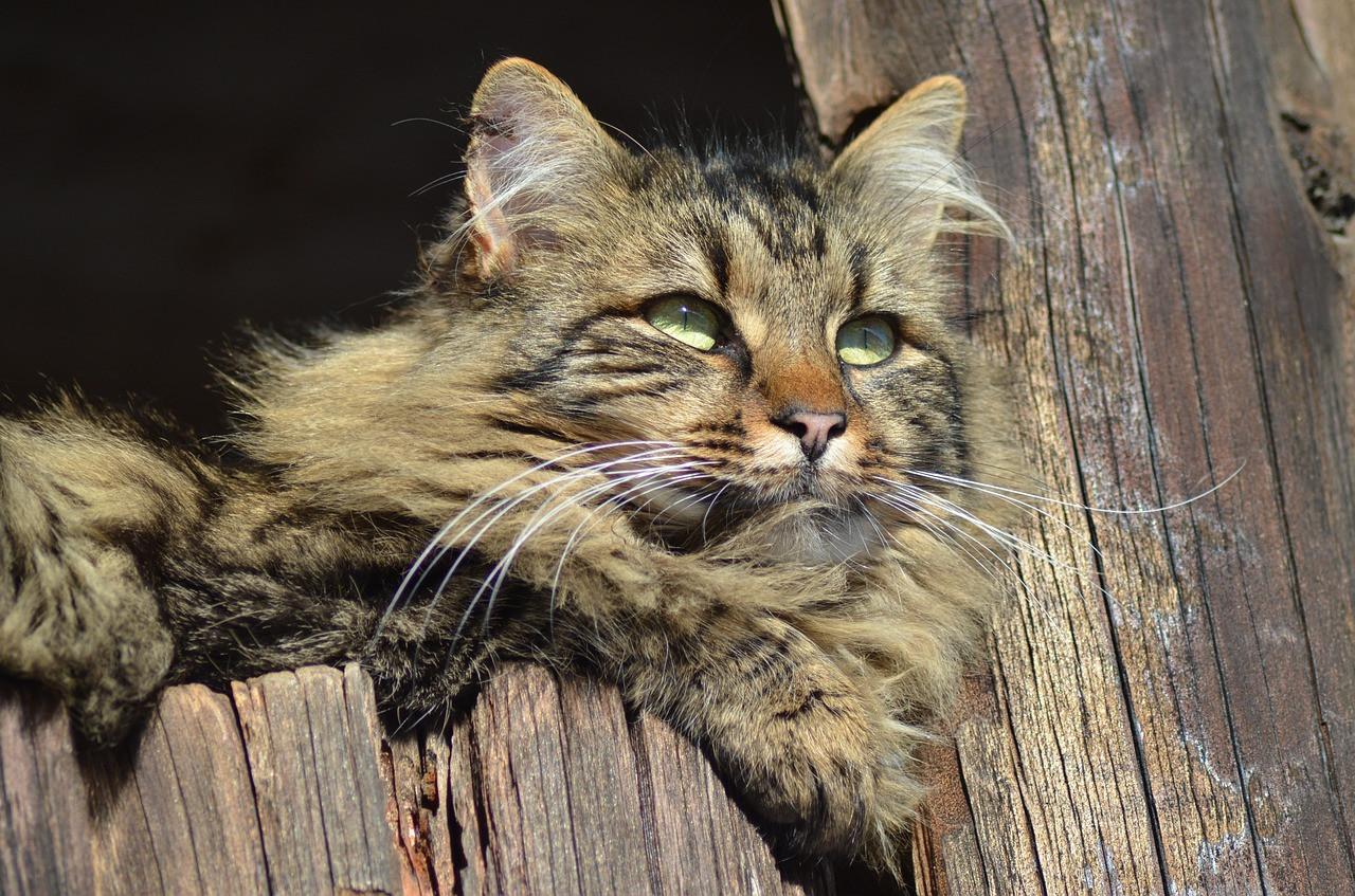 cat-644362_1280.jpg
