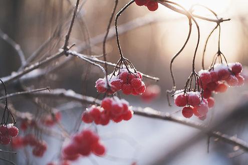 berries-1148973_1280.jpg