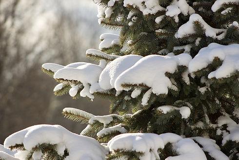 winter-3043919_1280.jpg