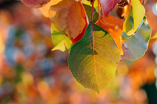 autumn-1868433_1920_edited.jpg