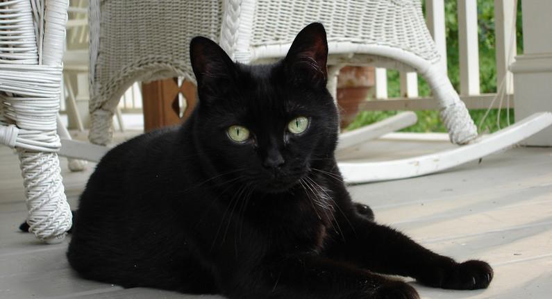 cat-880782_1280.jpg