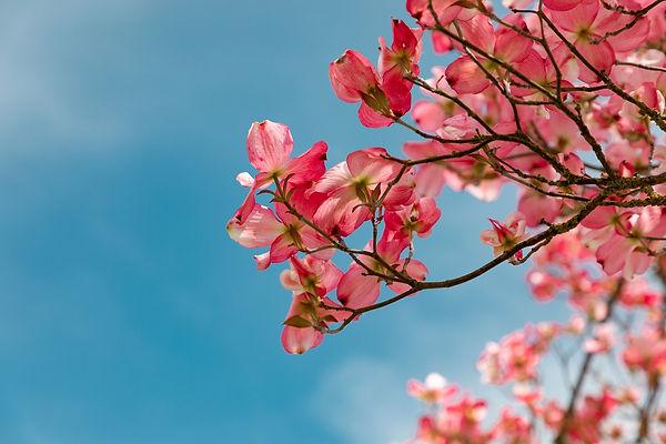 blossom-4151081_1920%20(1)_edited.jpg