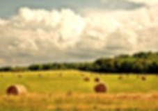 rural-4107054_1920_edited.jpg