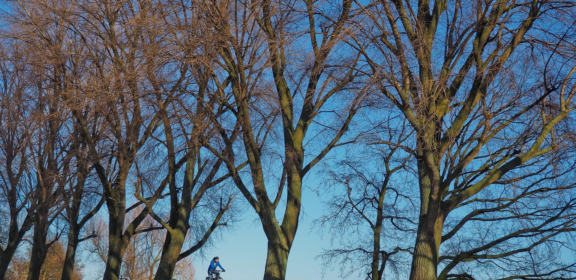 trees-3168329_1920.jpg