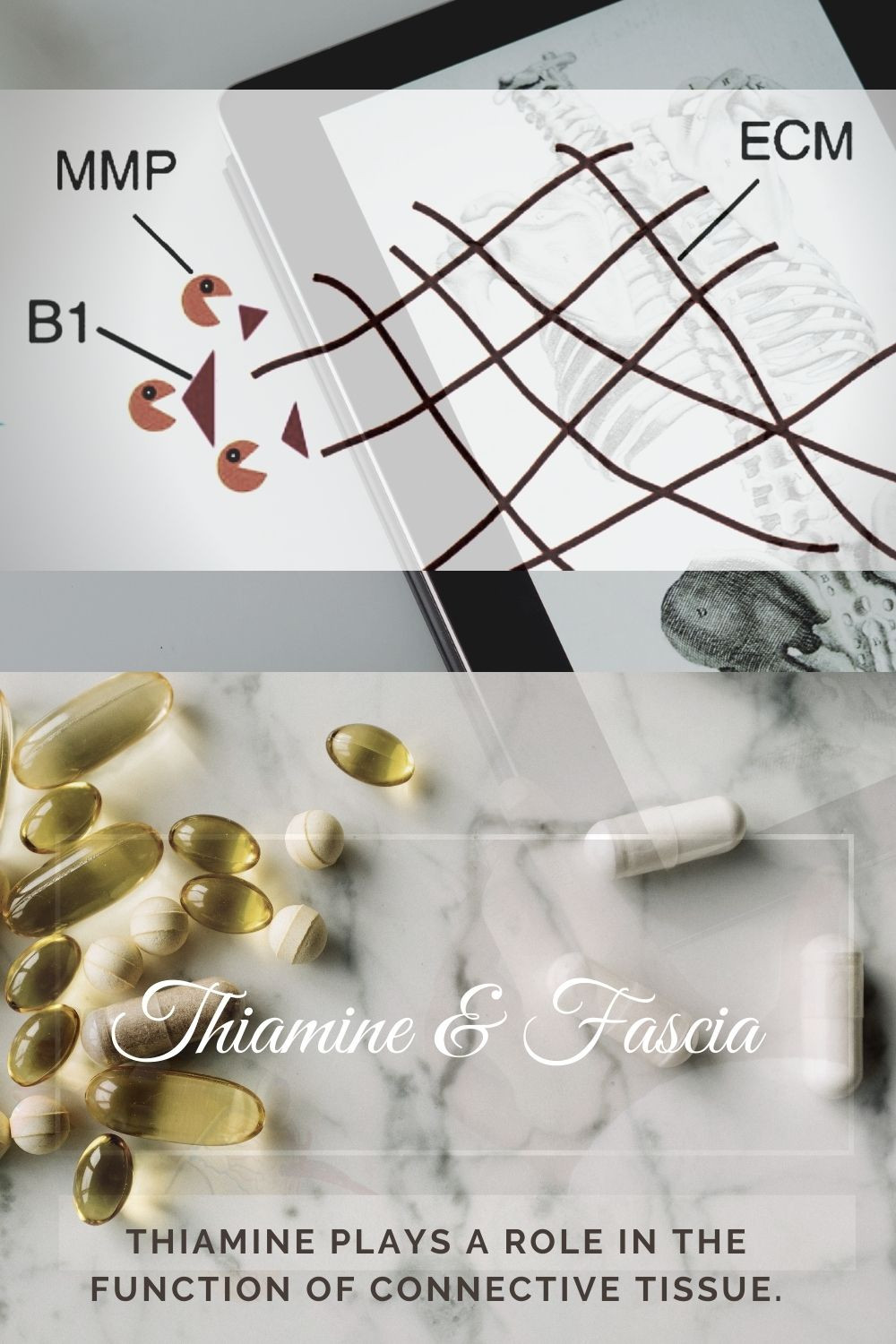 Thiamine Vitamin B1 role in fascia and connective tissue health and disorders like Ehlers-Danlos Syndrome and hypermobile spectrum disorders
