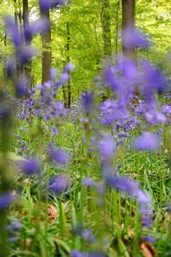 Spring on Halle wood