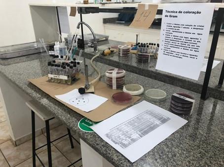 Aula prática presencial da disciplina Microbiologia.