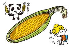 漢方・トウモロコシ
