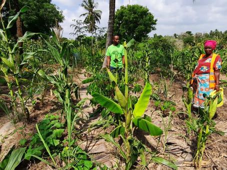 Regenerative Agriculture - Field Visit Report