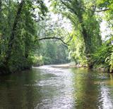 wetland02sml.JPG