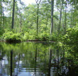 wetland01sml.JPG