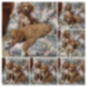 wp-1577976733831-1024x1024.jpg