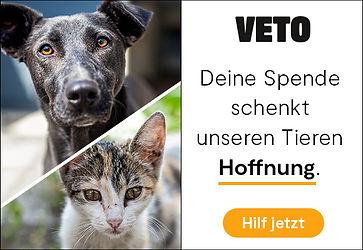 2020_Werbebanner_580_400-DogCat.jpg