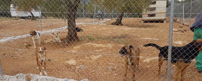 Tierschutz Spanien