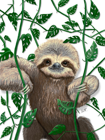 Sloth in the house
