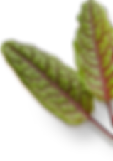 produce-leaves.png