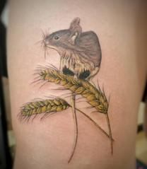 Maus auf Korn.jpg