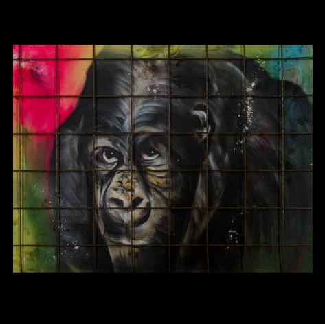 Moutain Gorilla