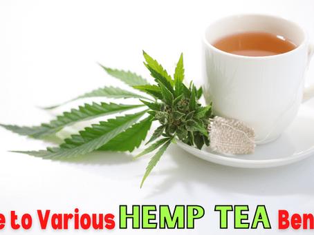 Guide to Various Hemp Tea Benefits