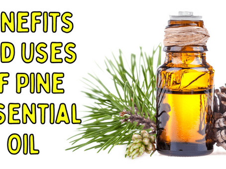 Benefits and Uses of Pine Essential Oil