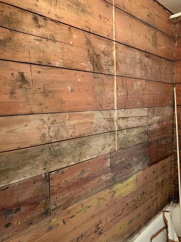 mold contractor dallas