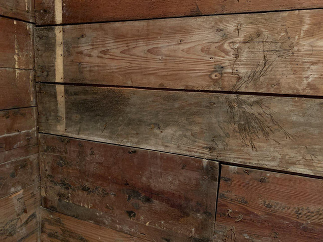 mold remediation companies dallas