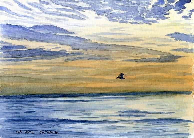 Pelican Off Long Boat Key