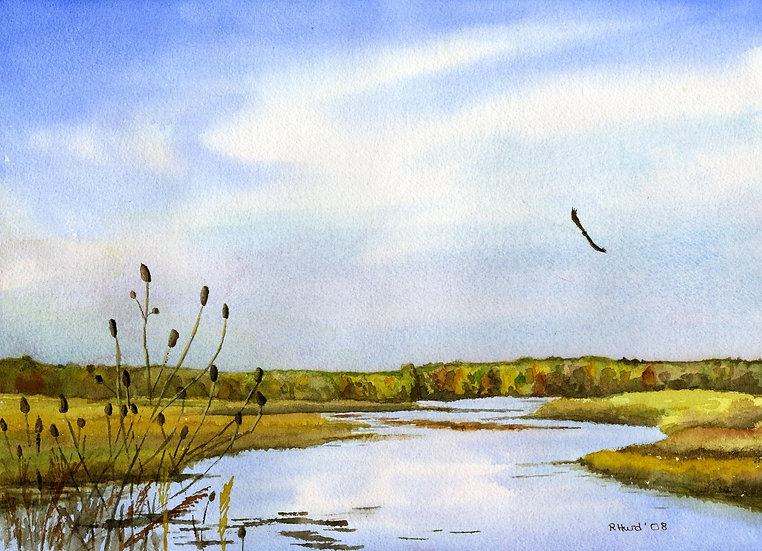 Hawk over Weaver Lake