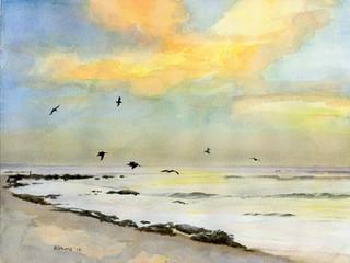 Pelicans Fishing