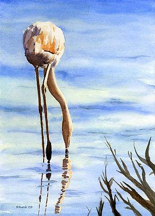 Flamingoing Lo 213_edited.jpg