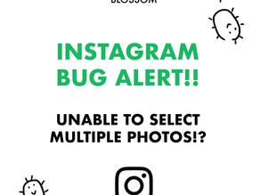 Instagram Bug Alert 🚨🚨