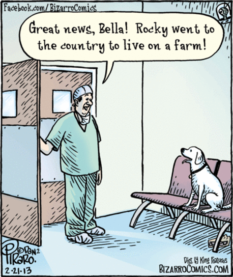 doctor tell dog treatment outcome