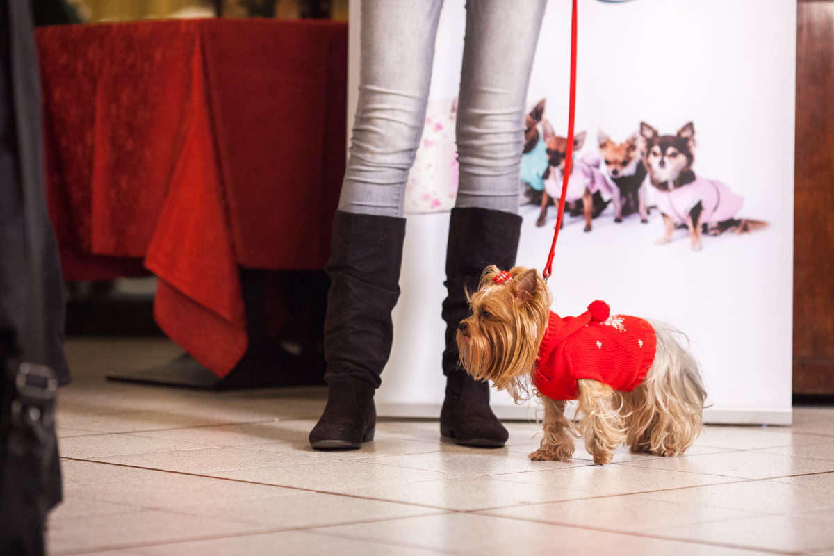 It-dogs-Natale2014-web-034.jpg