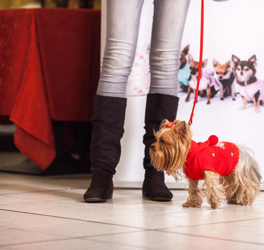 It-dogs-Natale2014-web-034