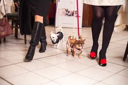 It-dogs-Natale2014-web-074.jpg