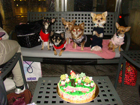 Coco's 6 birthday party