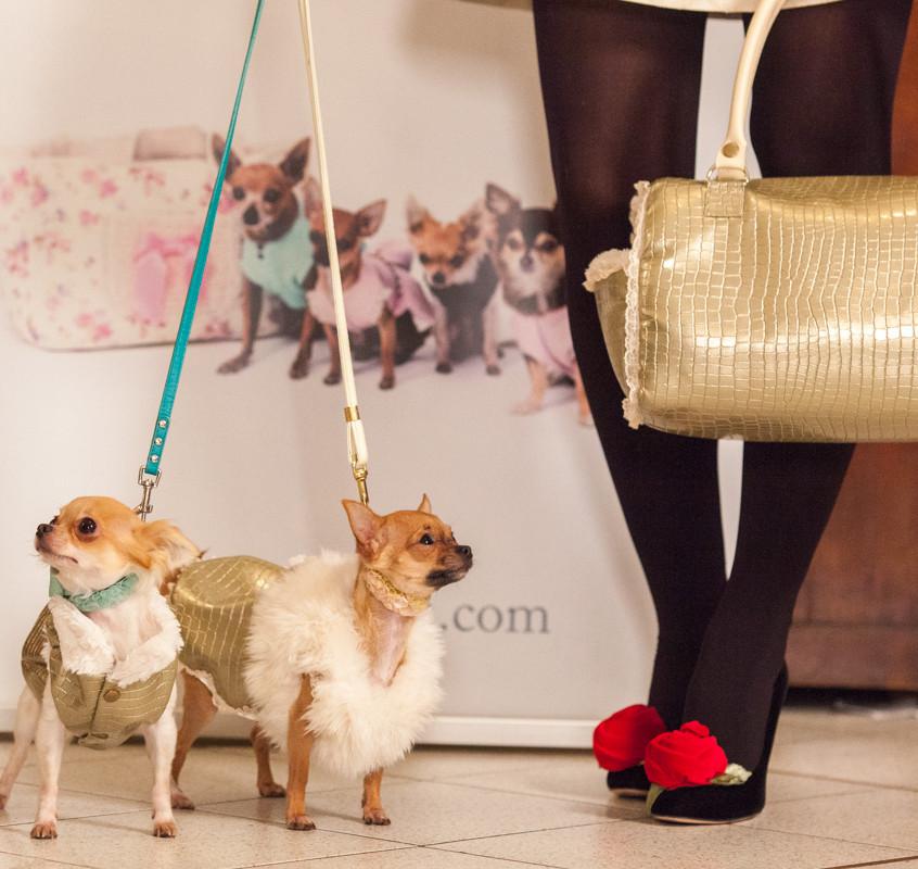 It-dogs-Natale2014-web-092