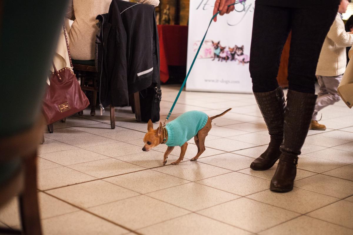 It-dogs-Natale2014-web-041.jpg