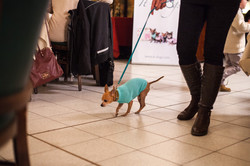 It-dogs-Natale2014-web-041.jpg