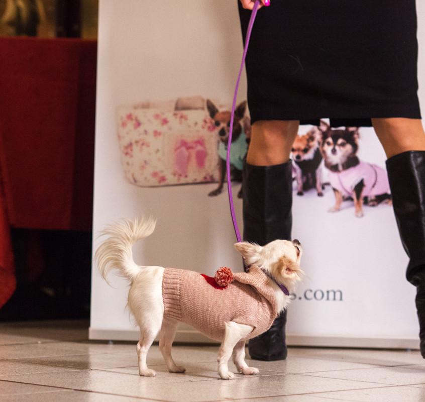 It-dogs-Natale2014-web-031