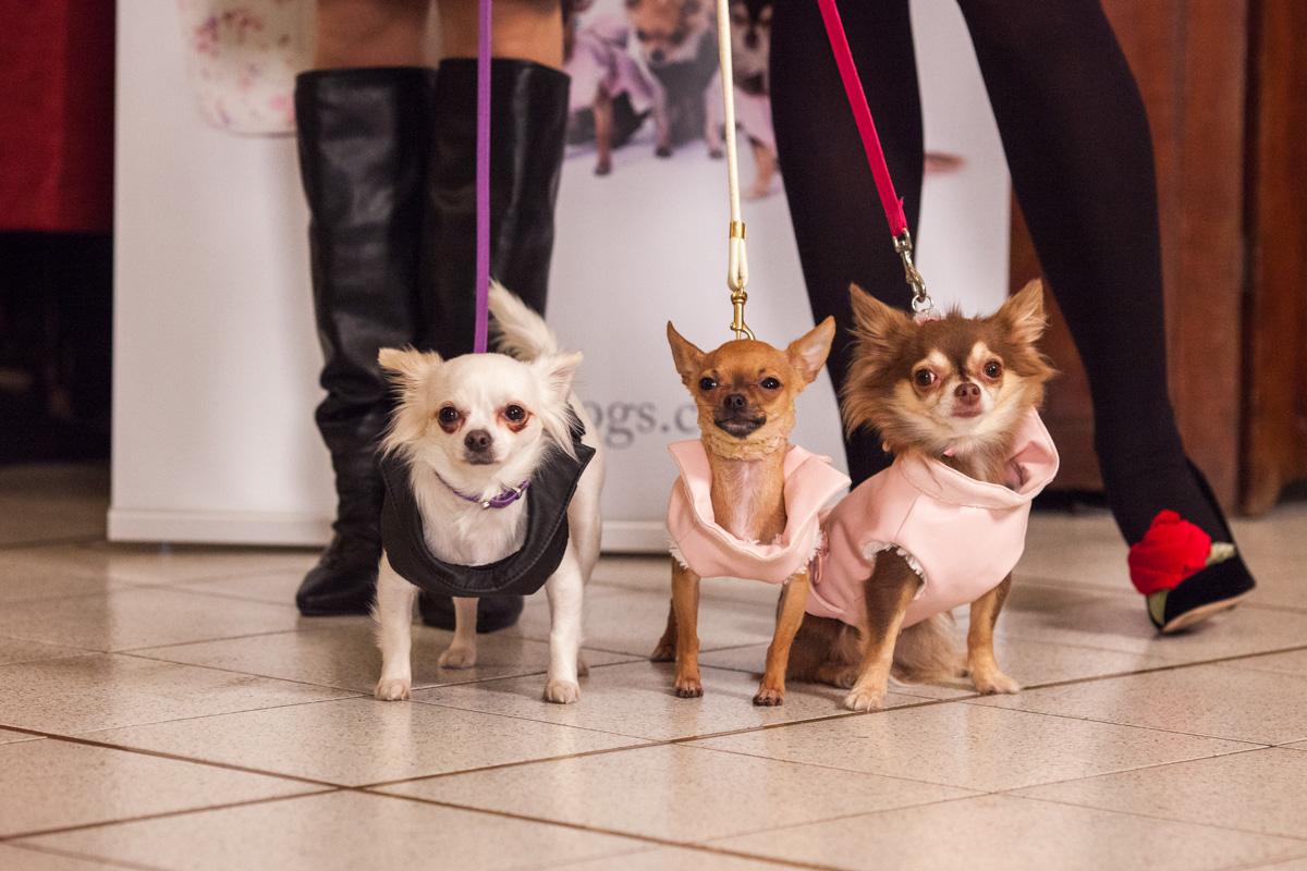 It-dogs-Natale2014-web-077.jpg