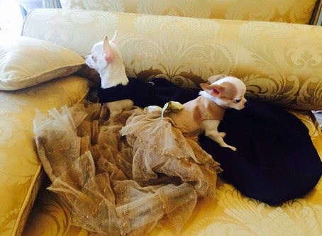 Baby cuties in our Couture dresses Collection