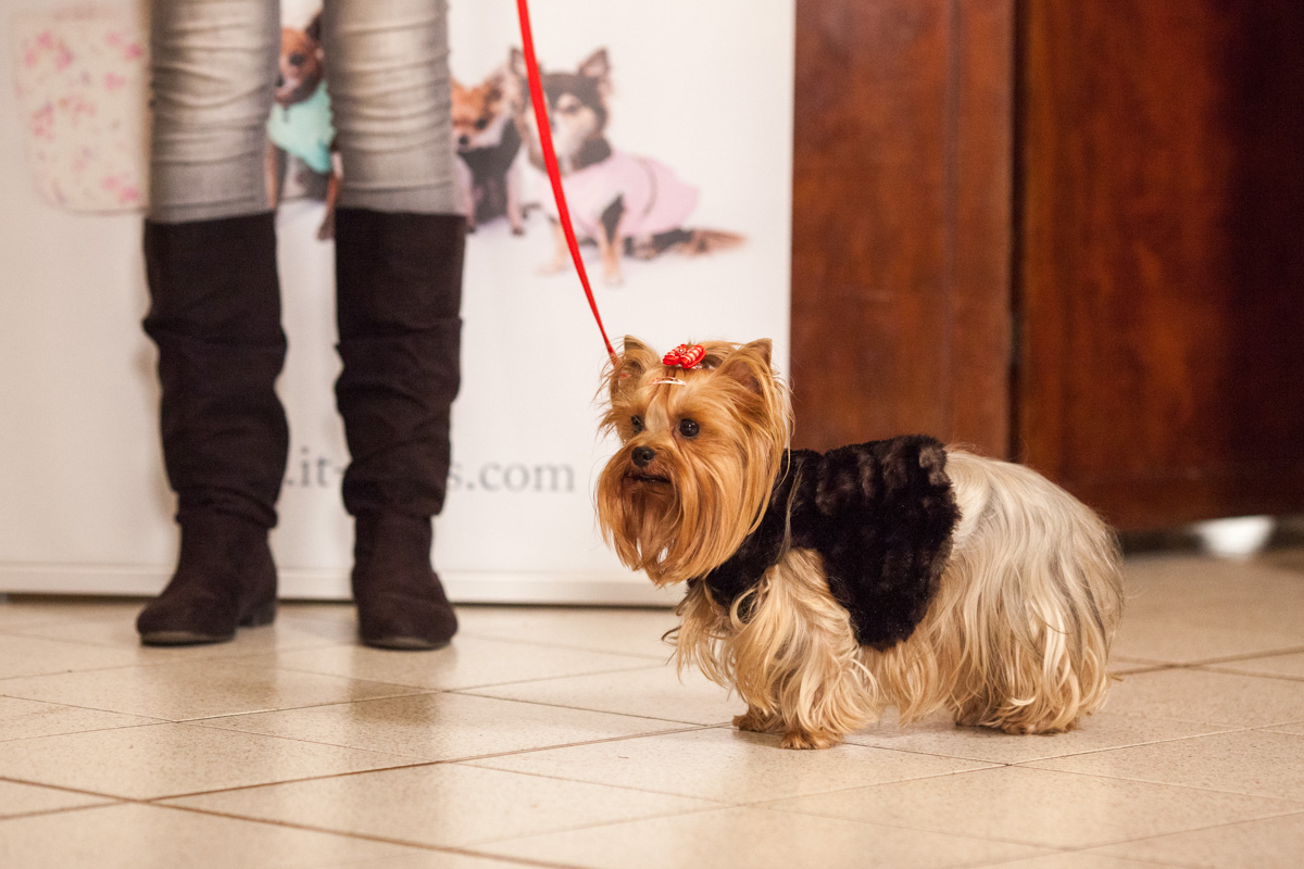 It-dogs-Natale2014-web-082.jpg
